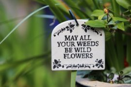 gardening tipa that will perk up your garden's beauty and style
