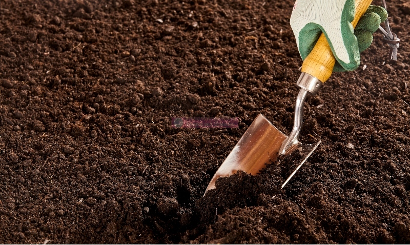 Solutions To Supercharge Garden Soil And Plant Growth